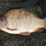 Karper vissen met de Methodfeeder